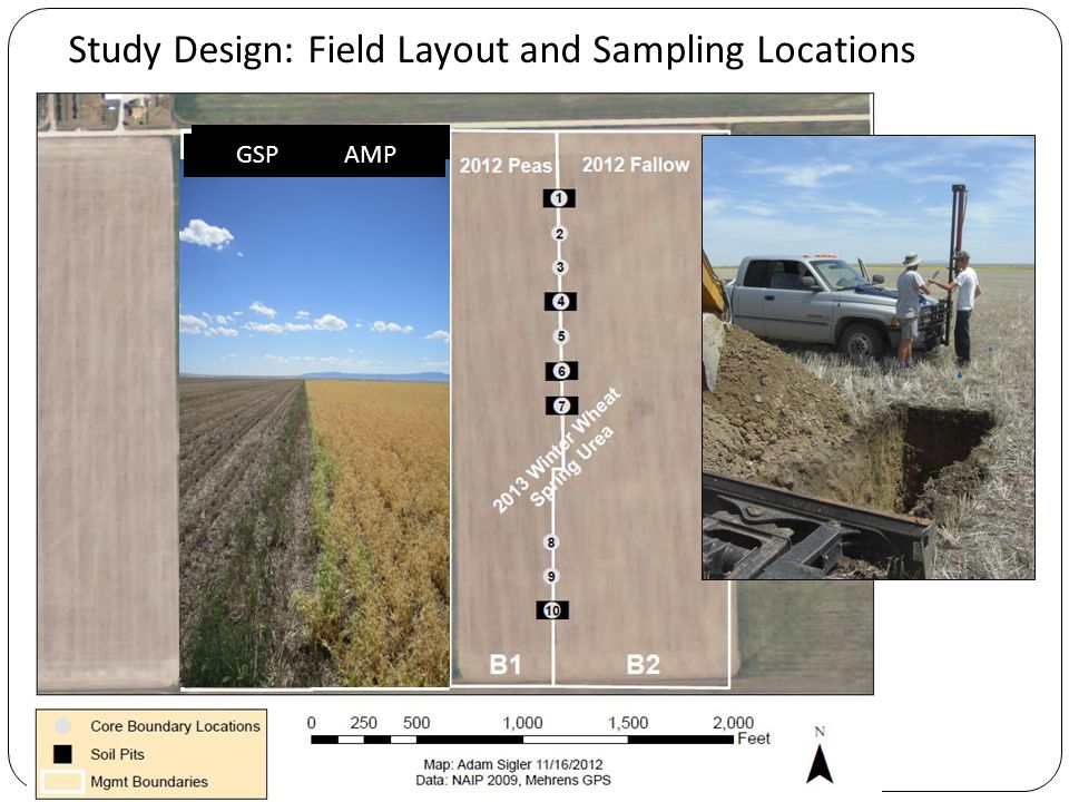 Field B Study Design: Field Layout and Sampling Locations 2014 Winter Wheat GSP AMP