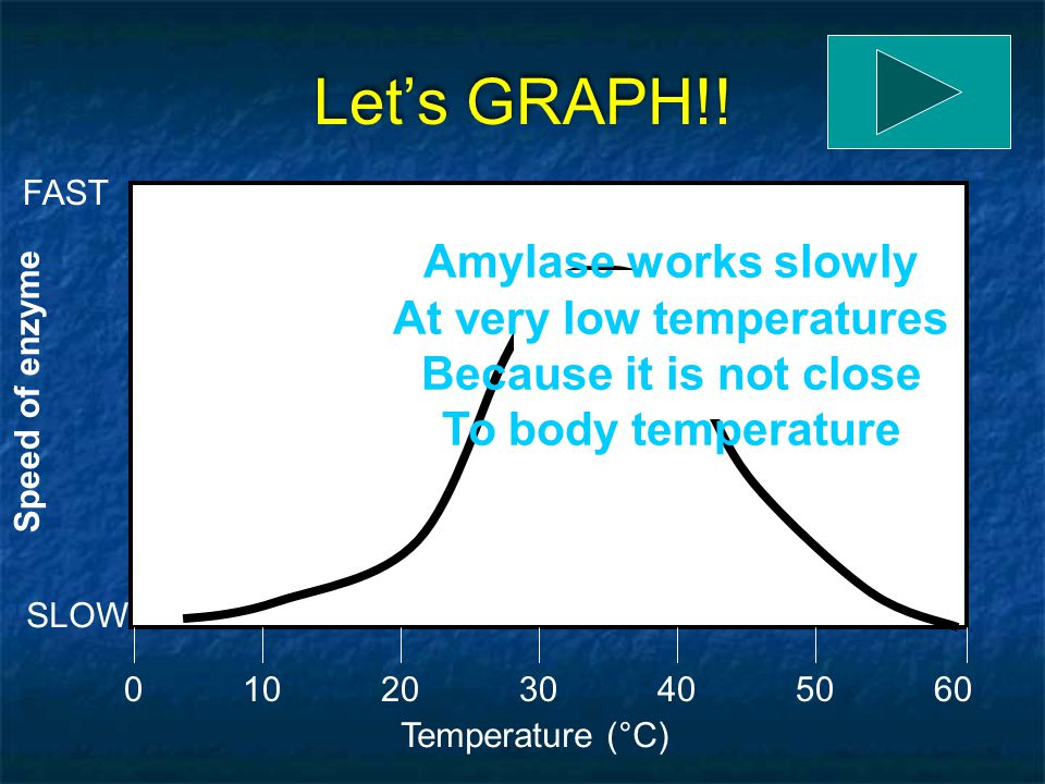 Let's GRAPH!! Temperature (°C) 0205060104030 Speed of enzyme SLOW FAST Amylase is found in saliva. 37°C is body temperature. RIGHT!! Amylase will work