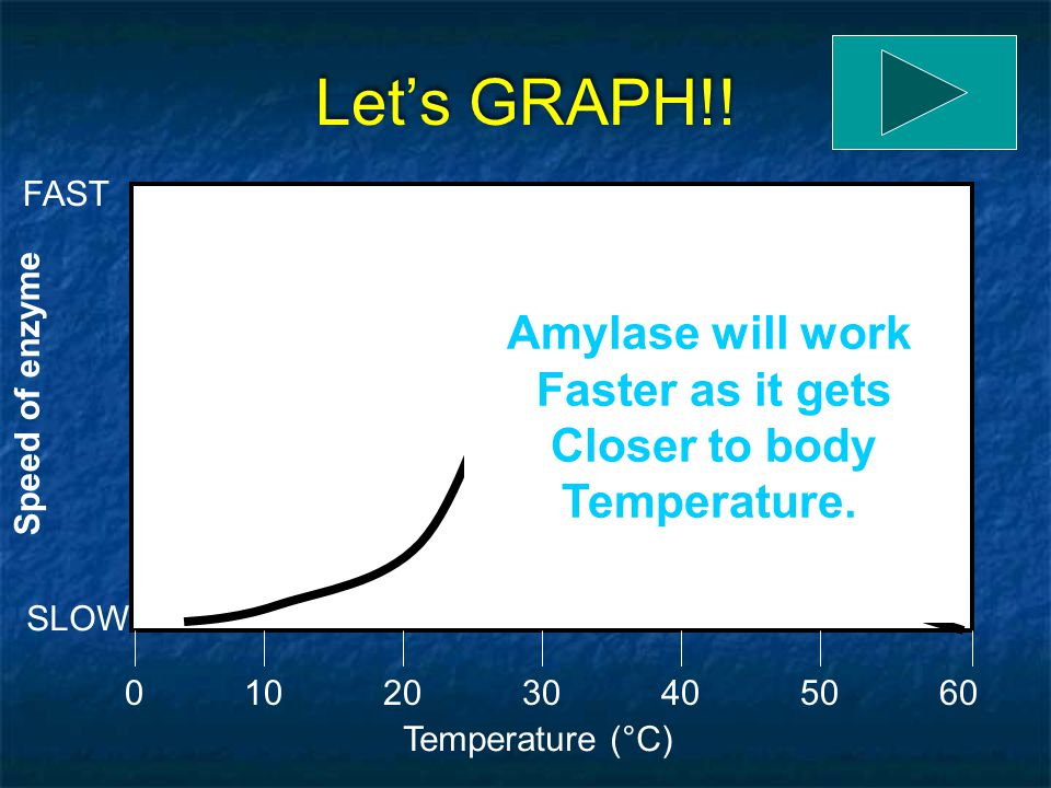 Let's GRAPH!! Temperature (°C) 0205060104030 Speed of enzyme SLOW FAST Amylase works slowly At very low temperatures Because it is not close To body t