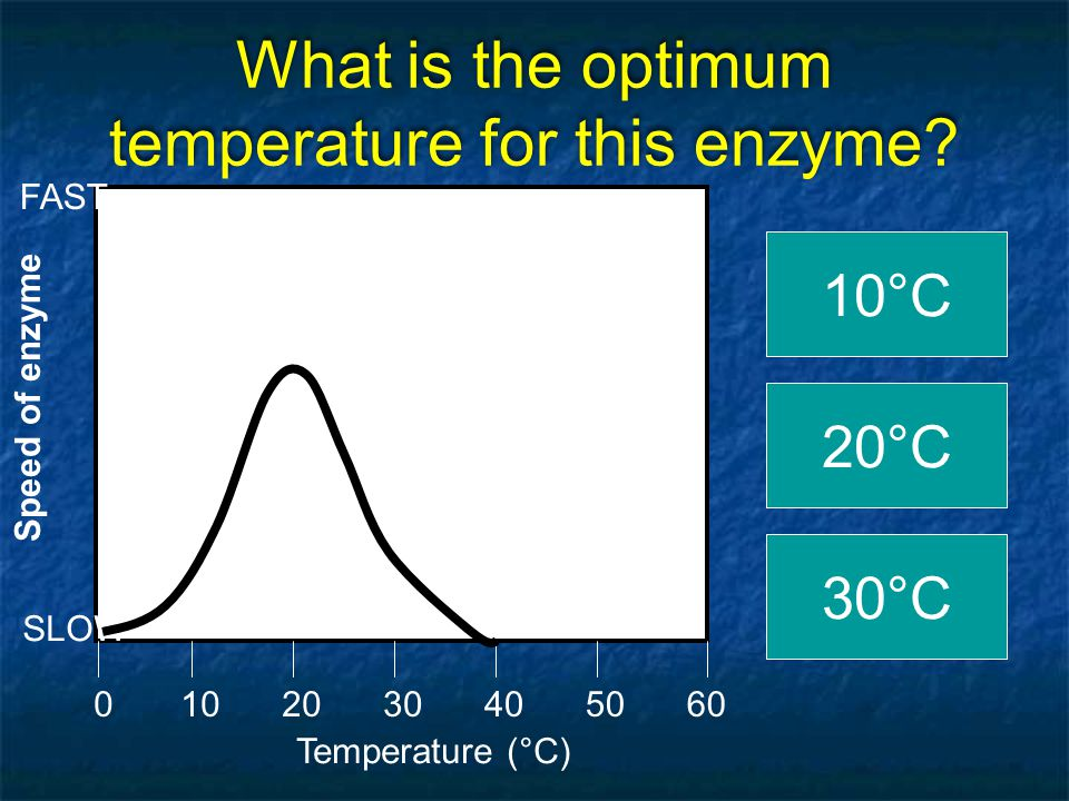 Let's GRAPH!! Temperature (°C) 0205060104030 Speed of enzyme SLOW FAST Click on the OPTIMUM TEMPERATURE RIGHT!!