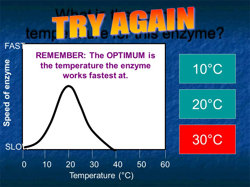 What is the optimum temperature for this enzyme? Temperature (  C) 0205060104030 Speed of enzyme SLOW FAST 10°C 20°C 30°C REMEMBER: The OPTIMUM is th