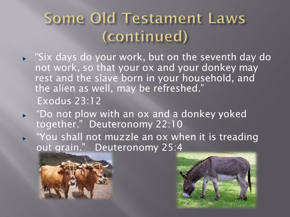 If you come across your enemy's ox or donkey wandering off, be sure to take it back to him.