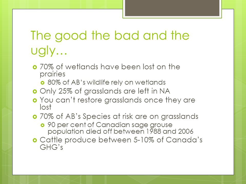 The good the bad and the ugly…  70% of wetlands have been lost on the prairies  80% of AB's wildlife rely on wetlands  Only 25% of grasslands are left in NA  You can't restore grasslands once they are lost  70% of AB's Species at risk are on grasslands  90 per cent of Canadian sage grouse population died off between 1988 and 2006  Cattle produce between 5-10% of Canada's GHG's