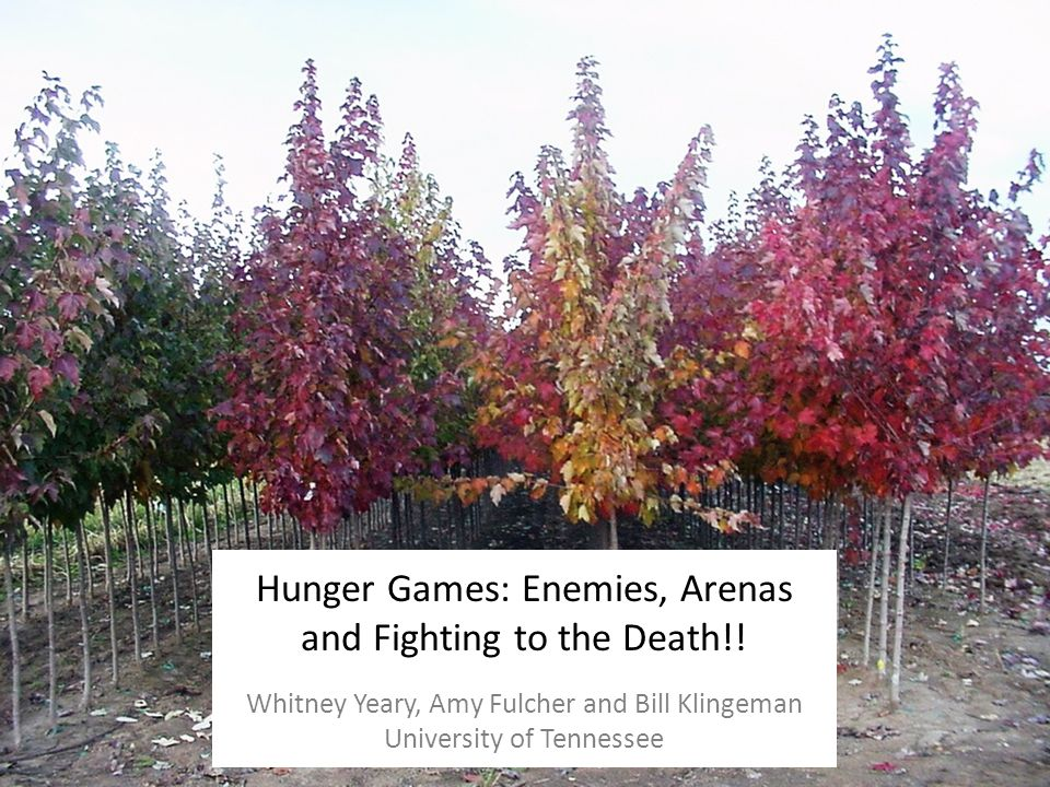 Hunger Games: Enemies, Arenas and Fighting to the Death!.