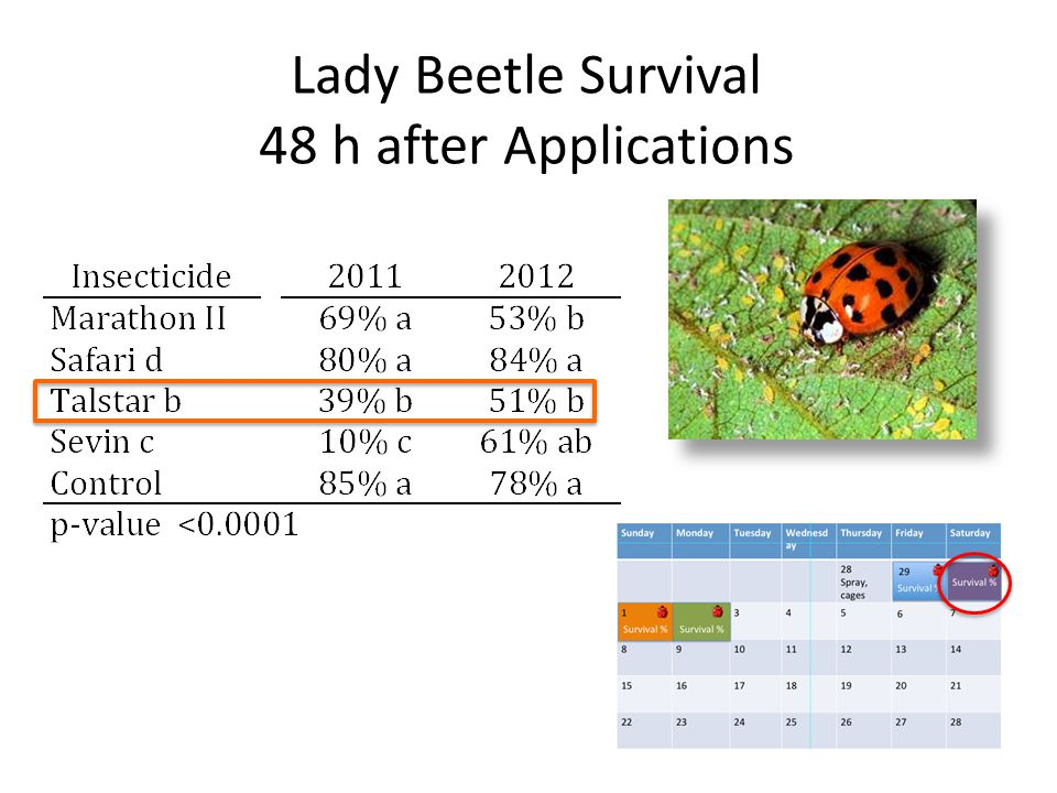 Lady Beetle Survival 48 h after Applications