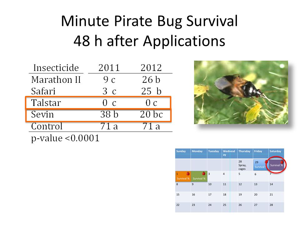 Minute Pirate Bug Survival 48 h after Applications