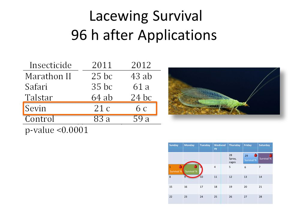 Lacewing Survival 96 h after Applications