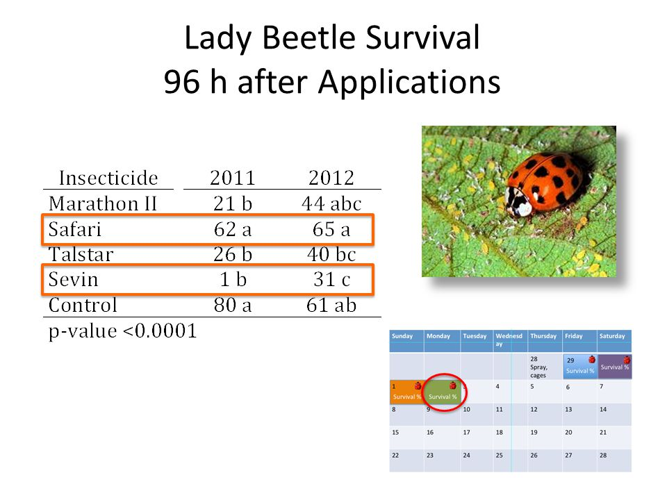 Lady Beetle Survival 96 h after Applications