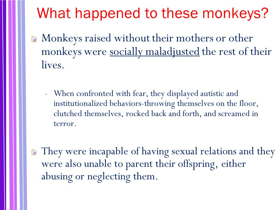 What happened to these monkeys.