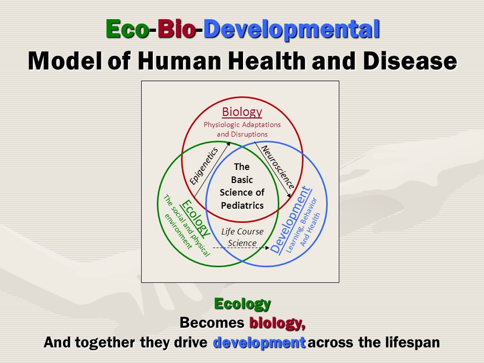 Eco-Bio-Developmental Model of Human Health and Disease Biology Physiologic Adaptations and Disruptions Ecology The social and physical environment Development Learning, Behavior And Health Life Course Science Neuroscience Epigenetics The Basic Science of Pediatrics Ecology Becomes biology, And together they development And together they drive development across the lifespan