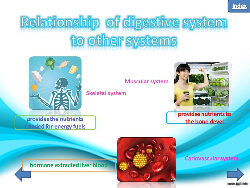 Skeletal system Muscular system