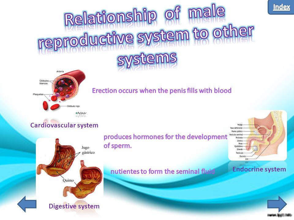 Cardiovascular system Digestive system Endocrine system