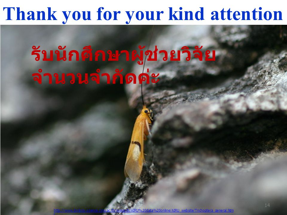 Thank you for your kind attention http://www.biology.science.cmu.ac.th/research/AIRU%20data%20online/AIRU_website/Trichoptera_general.htm l 14 รับนักศ
