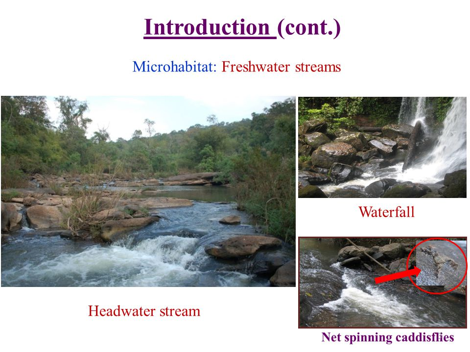 Microhabitat: Freshwater streams Introduction (cont.) 3 Headwater stream Waterfall