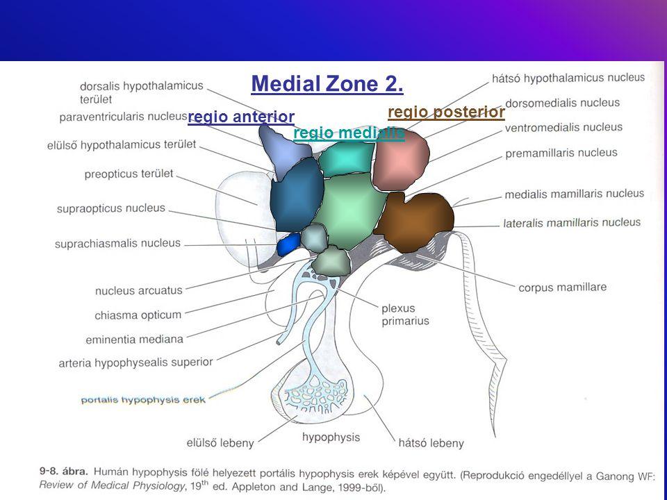 Medial Zone 2. regio anterior regio posterior regio medialis