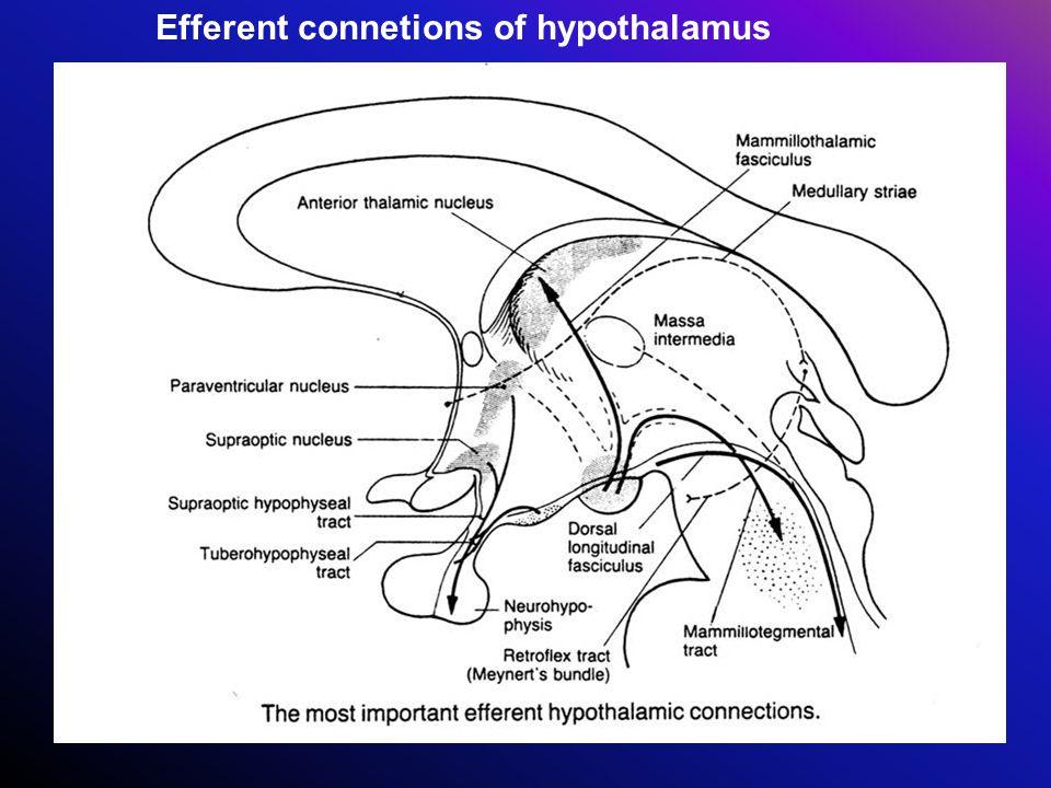 Efferent connetions of hypothalamus
