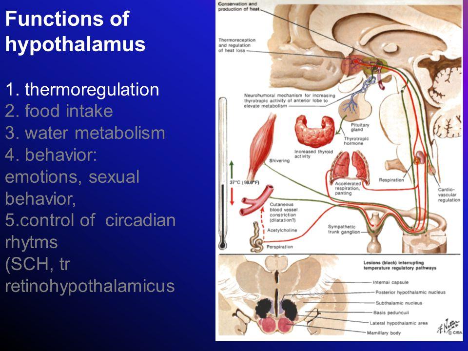 Functions of hypothalamus 1. thermoregulation 2. food intake 3. water metabolism 4. behavior: emotions, sexual behavior, 5.control of circadian rhytms