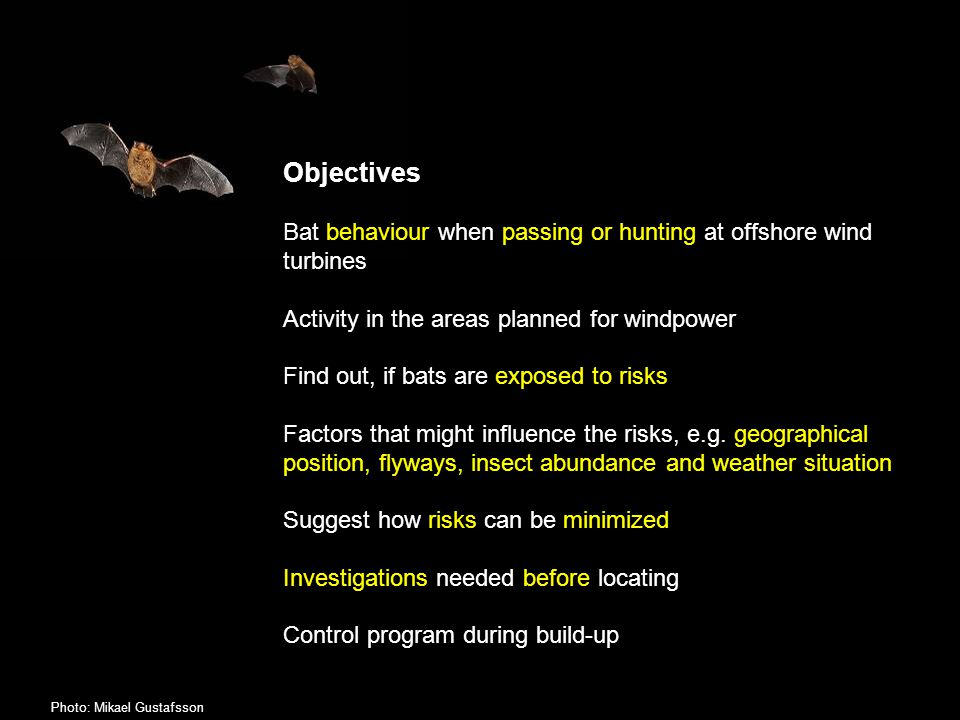 Objectives Bat behaviour when passing or hunting at offshore wind turbines Activity in the areas planned for windpower Find out, if bats are exposed to risks Factors that might influence the risks, e.g.