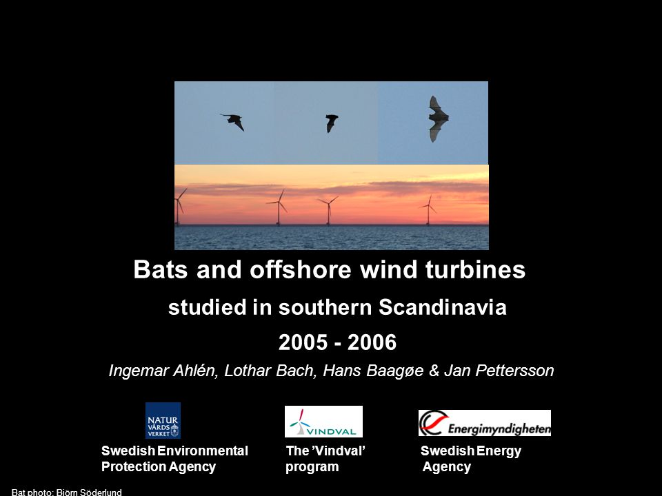 Bats and offshore wind turbines studied in southern Scandinavia 2005 - 2006 Swedish Environmental The 'Vindval' Swedish Energy Protection Agency program Agency Ingemar Ahlén, Lothar Bach, Hans Baagøe & Jan Pettersson Bat photo: Björn Söderlund