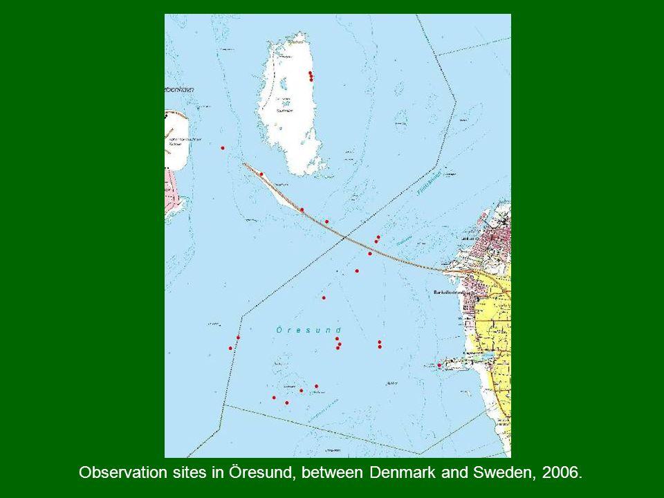 Observation sites in Öresund, between Denmark and Sweden, 2006.