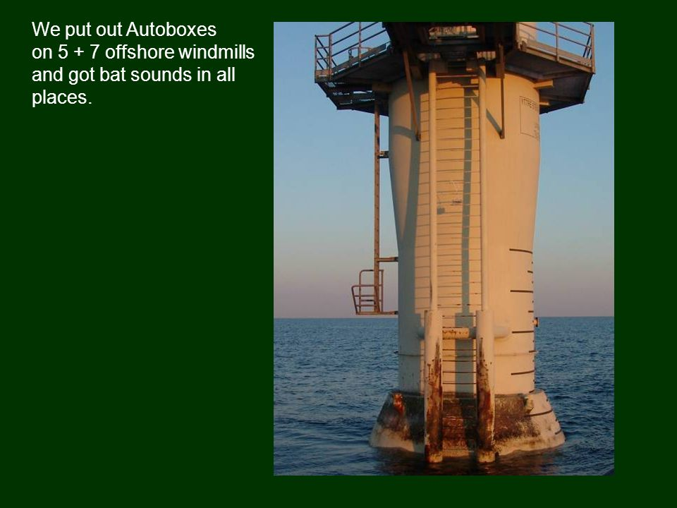We put out Autoboxes on 5 + 7 offshore windmills and got bat sounds in all places.