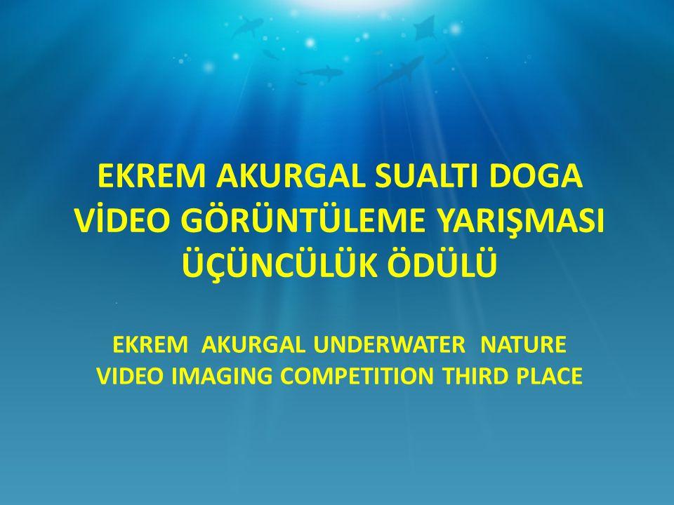 EKREM AKURGAL UNDERWATER NATURE VIDEO IMAGING COMPETITION THIRD PLACE EKREM AKURGAL SUALTI DOGA VİDEO GÖRÜNTÜLEME YARIŞMASI ÜÇÜNCÜLÜK ÖDÜLÜ