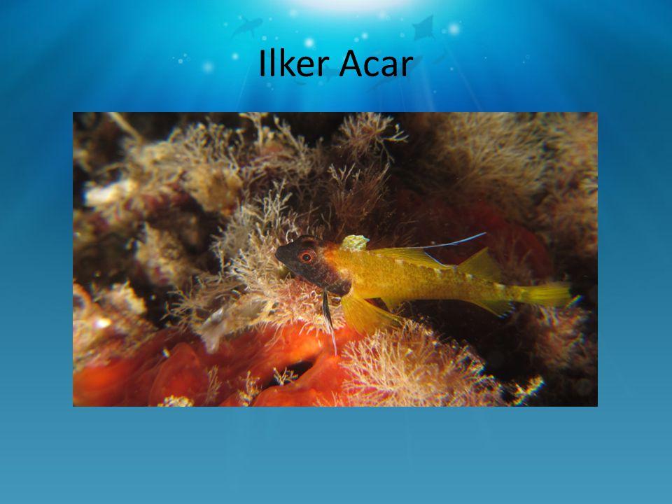 Ilker Acar
