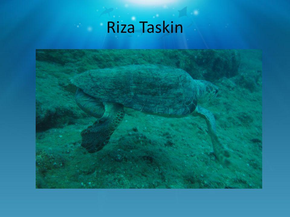 Riza Taskin