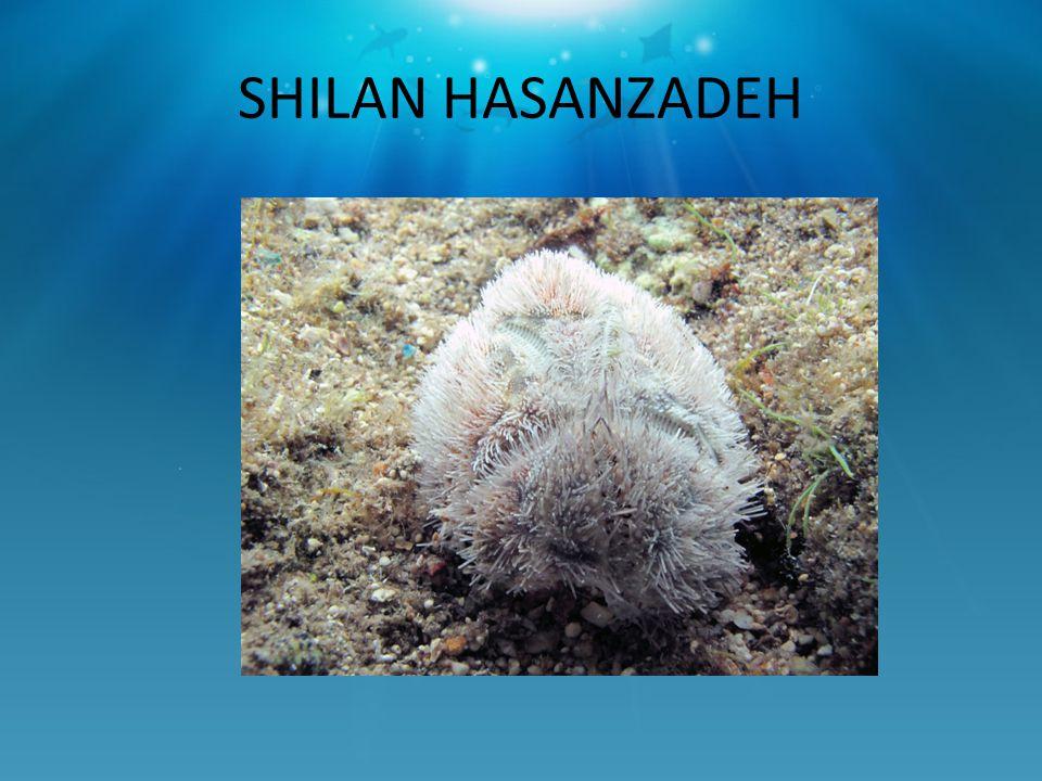 SHILAN HASANZADEH