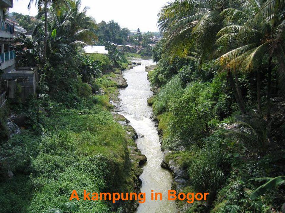 A kampung in Bogor