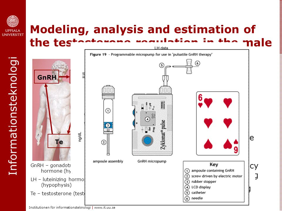 Informationsteknologi Institutionen för informationsteknologi |   Modeling, analysis and estimation of the testosterone regulation in the male GnRH LH Te Problems addressed:  Mathematical modeling  Kinetic parameter estimation  Estimation of GnRH pulses Why.