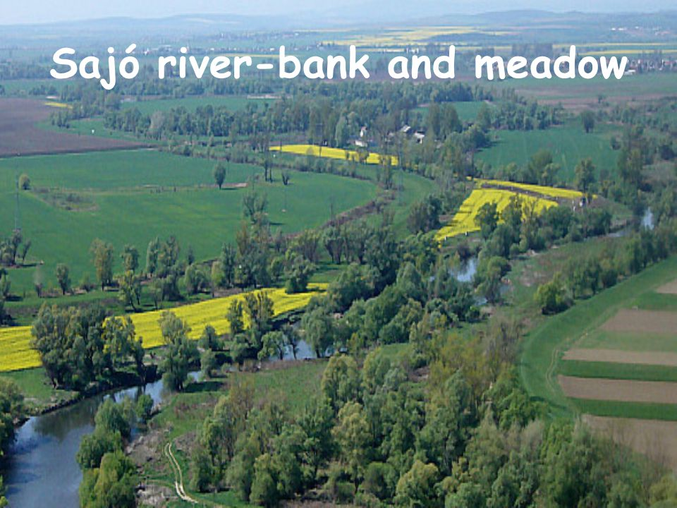 Sajó river-bank and meadow