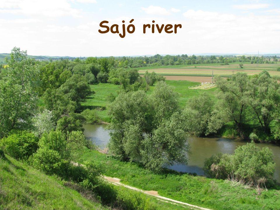 Sajó river