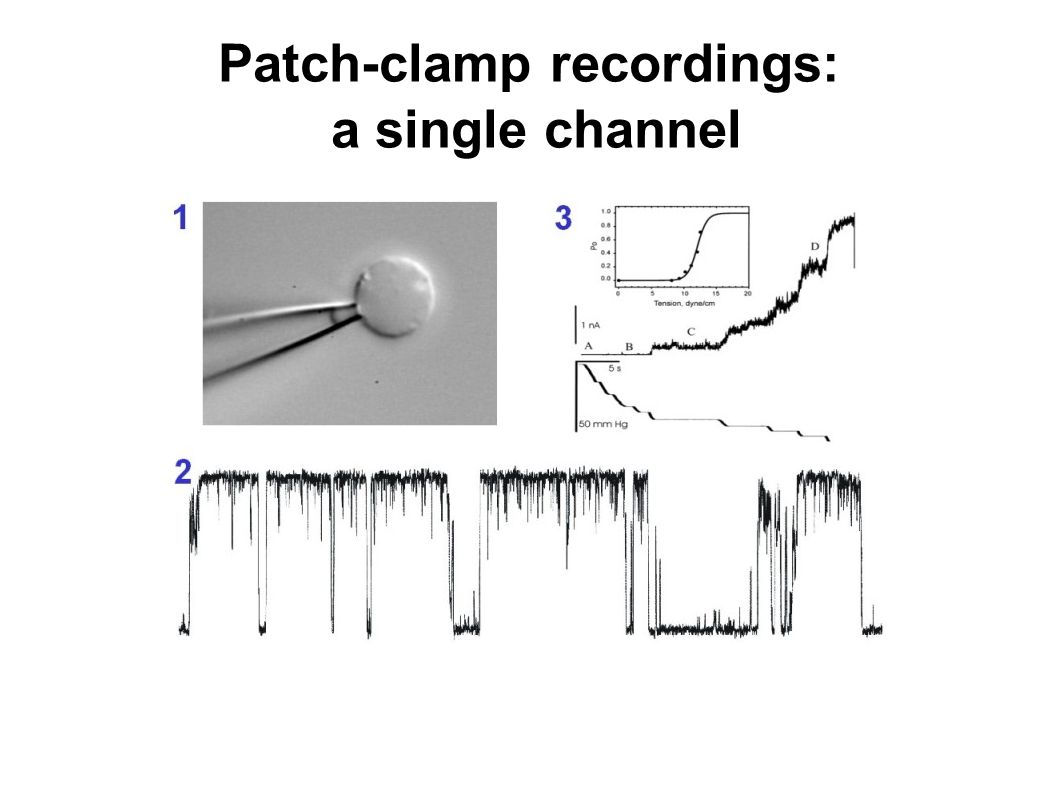 Patch-clamp recordings: a single channel