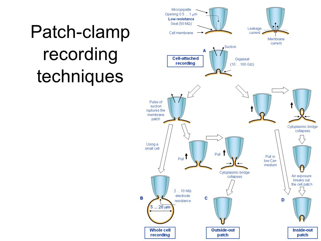 Patch-clamp recording techniques