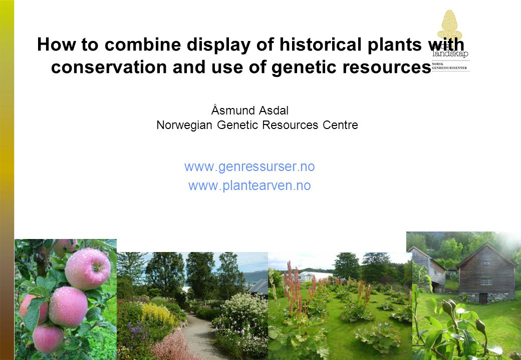 How to combine display of historical plants with conservation and use of genetic resources Åsmund Asdal Norwegian Genetic Resources Centre www.genress