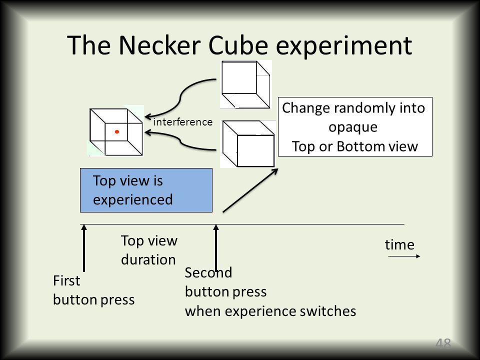 The Necker Cube experiment time First button press Top view is experienced Second button press when experience switches Change randomly into opaque Top or Bottom view Top view duration 48 interference