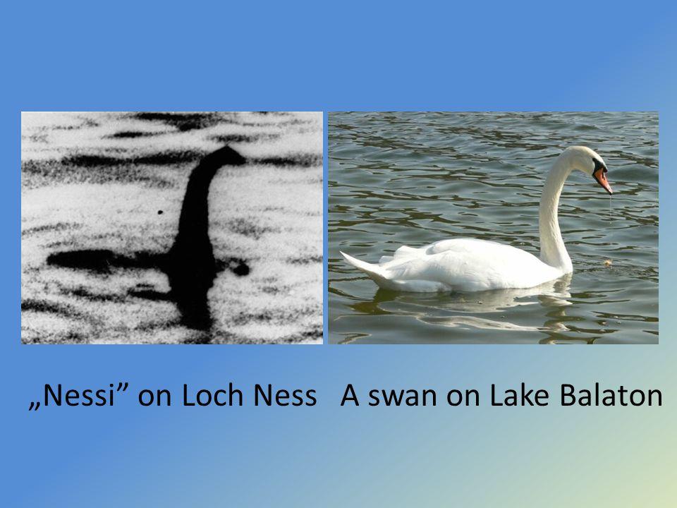 """Nessi on Loch NessA swan on Lake Balaton"