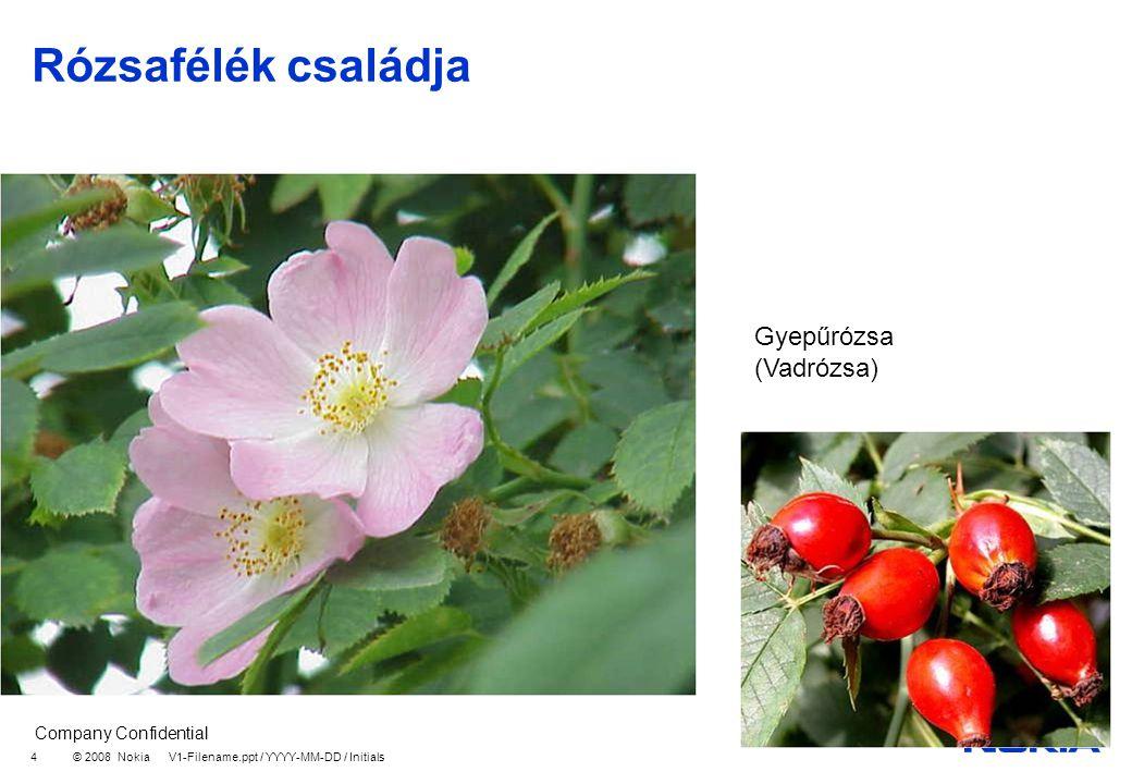 Company Confidential © 2008 Nokia V1-Filename.ppt / YYYY-MM-DD / Initials 4 Rózsafélék családja Gyepűrózsa (Vadrózsa)
