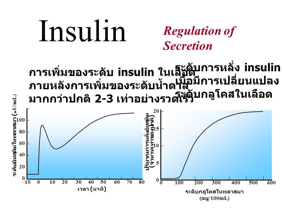 Insulin receptor α unit (outer membrane) β unit (transmembrane )