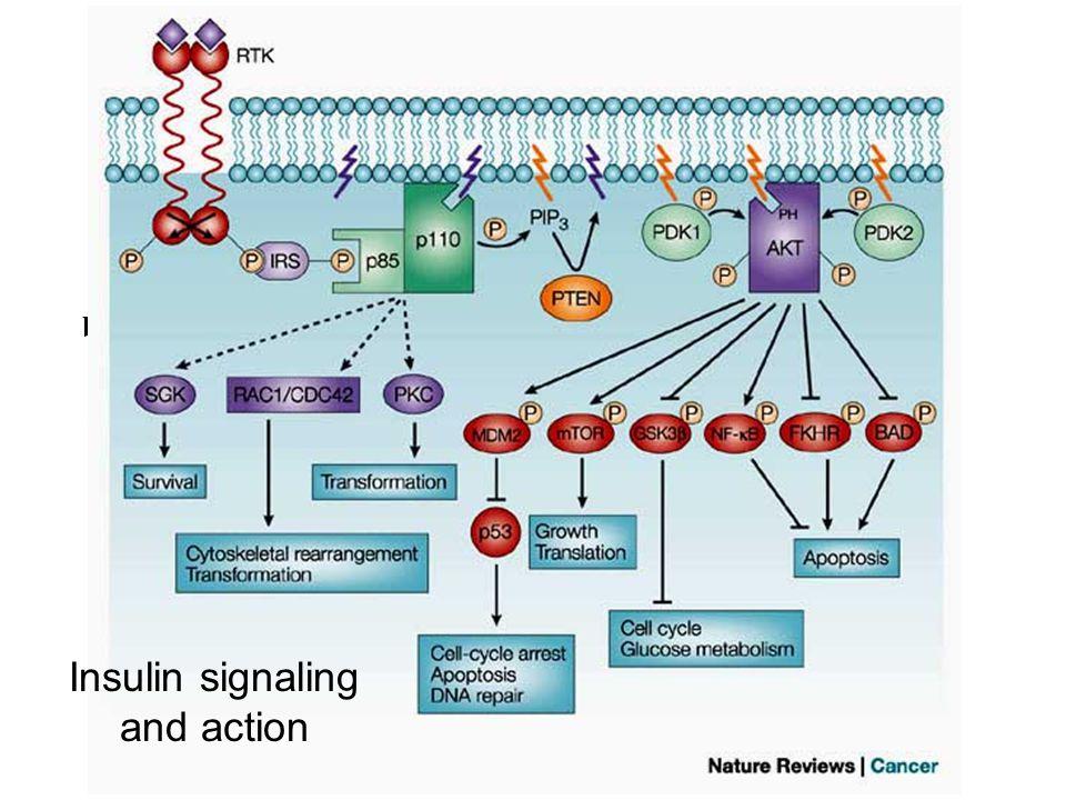 Insulin internalization Richard A Roth: Diabetes Mellitus: A Fundamental and Clinical Text, 3rd Edition