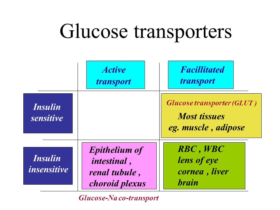 Glucose transporter (GLUT) GLUTTissue/Organ GLUT-1RBC, endothelial cells and other cells GLUT-2(bidirectional) Renal tubular cell, intestinal epithelial cell, liver, pancreas GLUT-3Neurons, placenta GLUT-4Adipose tissue, striated muscle