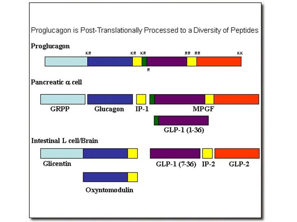 Glucose depletion Glucagon release