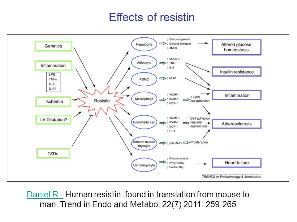 Adipose hormones in summary