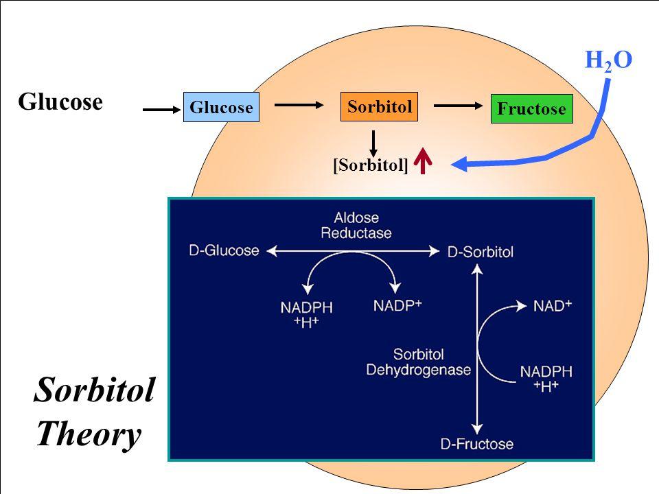 Non-Enzymatic Glycosylation of Protein (Glycation) หมู่ carbonyl อิสระของ glucose จะ ทำปฏิกิริยาอย่างช้า ๆ กับ หมู่ a amino ของ ปลาย N-terminal และ e-amino ของ lysine Val-NH 2 ปลายอะมิโน ของสายโกลบิน O OH HO CH 2 OH กลูโคส Stable Ketoamine HbA1c Amadori rearrangement Unstable schiff base almidine pre-HbA1c Val- N H C H C OH HO C H H C OH CH 2 OH Val- N H H 2 C C O HO C H H C OH CH 2 OH