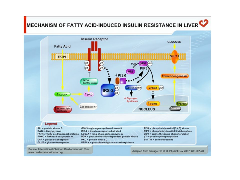 Maintenance of Blood Glucose levels Fed Gut Dietary CHO Glucose Fasting : 12 hrs ( glycogenolysis ) Glycogen Glycerol AA LactateGlucose Brain RBC Other tissues Glucose Glycerol AA Lactate Starved : 30 hrs ( gluconeogenesis )