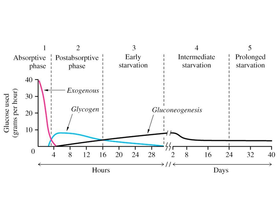 Hypoglycemia Definition plasma glucose < 60 mg/dl Symptomatic plasma glucose < 45 mg/dl