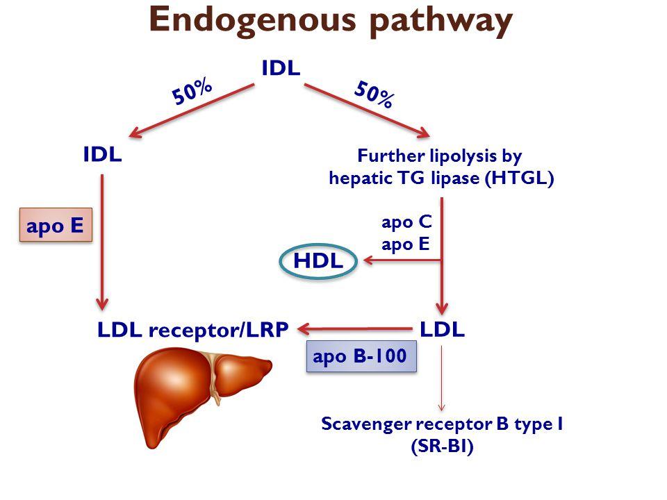 Endogenous pathway IDL LDL receptor/LRP 50% apo E 50% Further lipolysis by hepatic TG lipase (HTGL) LDL HDL apo C apo E apo B-100 Scavenger receptor B