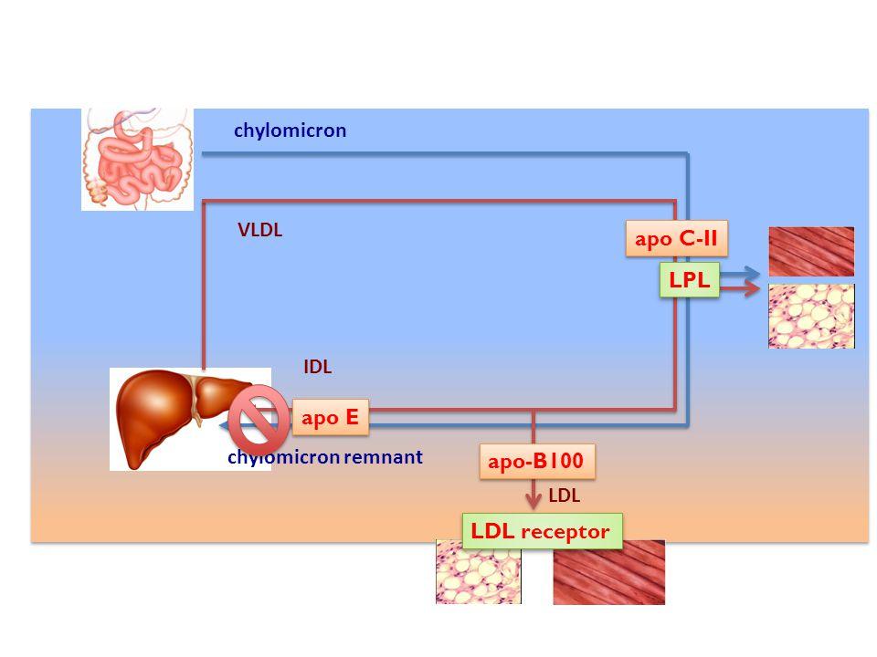 LDL receptor LPL apo-B100 apo E apo C-II chylomicron chylomicron remnant VLDL IDL LDL