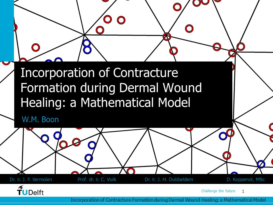 Incorporation of Contracture Formation during Dermal Wound Healing: a Mathematical Model 1 Challenge the future Incorporation of Contracture Formation during Dermal Wound Healing: a Mathematical Model W.M.